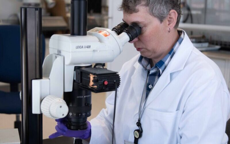 Analizando muestra en oqotech